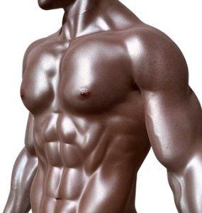 bodybuilder-331670__340